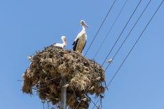 De witte ooievaars nestelen Bulgaars dorp Blauwe hemel op achtergrond Stock Foto