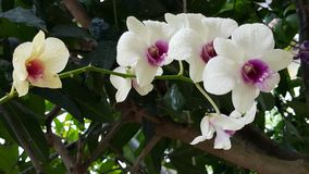 De witte orchidee bloeit installaties Royalty-vrije Stock Afbeeldingen