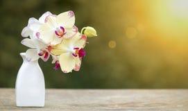 De witte purpere banner van de orchideebloem Stock Afbeelding
