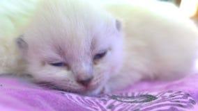 De witte slaap van het kattenkatje op bed stock videobeelden