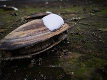 De witte sneeuw die shell behandelen royalty-vrije stock foto