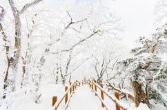 De witte sneeuw van het de winterlandschap van Berg in Korea Stock Afbeeldingen