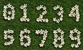 De witte tropische bloemen van het aantal op groen gras Stock Afbeelding