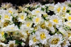 De witte Uitstekende Achtergrond van de Chrysantenbloem Royalty-vrije Stock Fotografie