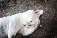 De witte verdwaalde kat verwart binnen actie Royalty-vrije Stock Foto's