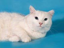De witte vette kat ligt op blauw Stock Fotografie