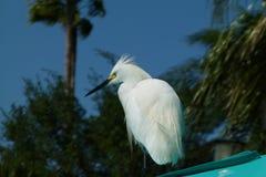 De witte vogel van caribic royalty-vrije stock foto's