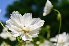 De witte voorgrond van de bloem selectieve nadruk stock foto