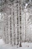 De witte winter in bos Stock Afbeeldingen