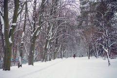 De witte winter in het park Royalty-vrije Stock Foto