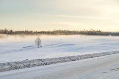 De witte winter, mist en bomen Stille en zonnige ochtend Royalty-vrije Stock Foto's