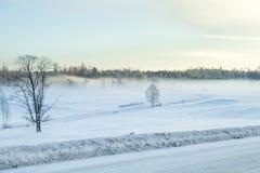 De witte winter, mist en bomen Stille en zonnige ochtend Stock Afbeelding