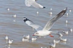 De witte zeemeeuw die in de hemel over het overzees vliegt Royalty-vrije Stock Afbeelding