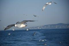 De witte zeemeeuwen over het overzees royalty-vrije stock afbeeldingen