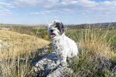 De witte zitting van de toeristenhond in de berg stock foto