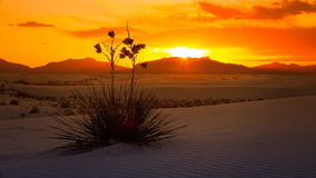 De witte Zonsondergang van het Zand Nationale Monument, New Mexico - Timelapse Stock Afbeeldingen