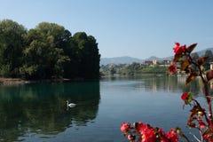 De witte zwaan zwemt in een meer onder een blauwe hemel stock afbeelding