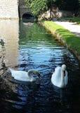De witte Zwanen van de Kasteelgracht royalty-vrije stock foto