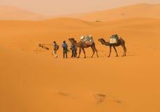 In de woestijn Stock Fotografie