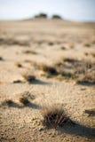 In de woestijn Stock Foto