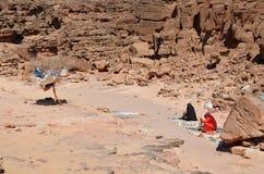 In de woestijn Royalty-vrije Stock Foto's