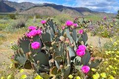 De woestijn in bloei Royalty-vrije Stock Afbeelding