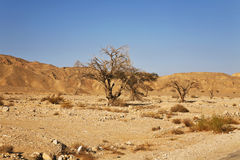 De woestijn in Israël Stock Afbeeldingen
