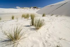 De woestijn Leba Stock Foto