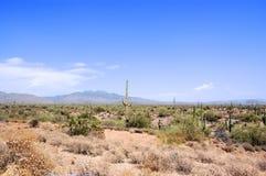De Woestijn van Arizona Stock Fotografie