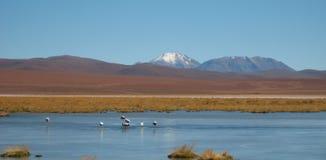 De Woestijn van Atacama, Chili stock afbeelding