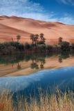 De woestijn van de oase Stock Foto's