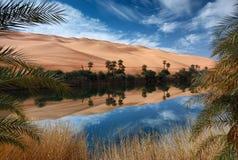 De woestijn van de oase Stock Afbeeldingen