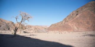 De woestijn van de steen in Israël Stock Fotografie