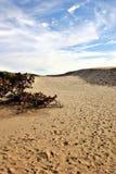 De woestijn van Denemarken stock afbeeldingen