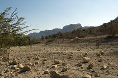De woestijn van Israël stock fotografie