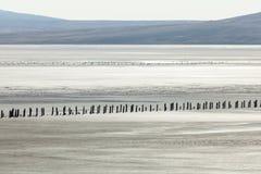 De woestijn van Judean royalty-vrije stock foto