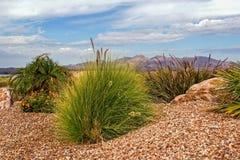 De woestijn van Judean Royalty-vrije Stock Afbeeldingen