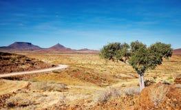 De Woestijn van Kalahari, Namibië stock foto's