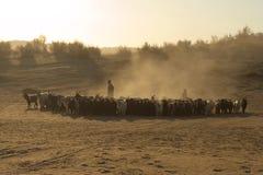 De woestijn van Kyzylkum Royalty-vrije Stock Afbeeldingen