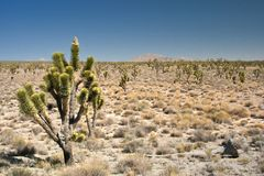 De Woestijn van Mojave stock foto's