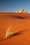De woestijn van Namib Royalty-vrije Stock Foto