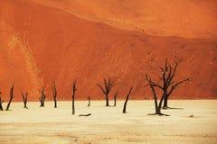 De woestijn van Namib Stock Afbeeldingen