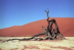 De woestijn van Namib Royalty-vrije Stock Fotografie