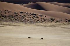 De woestijn van Namibië Stock Foto