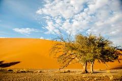 De Woestijn van Namibië, Afrika Stock Afbeelding