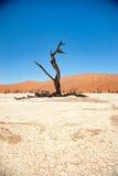 De Woestijn van Namibië, Deadvlei, Afrika Stock Fotografie