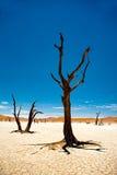 De Woestijn van Namibië, Deadvlei, Afrika Royalty-vrije Stock Foto's