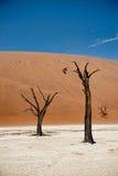 De Woestijn van Namibië, Deadvlei, Afrika Stock Foto