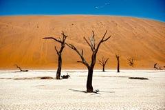 De Woestijn van Namibië, Deadvlei, Afrika Stock Afbeeldingen