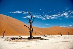 De Woestijn van Namibië, Deadvlei, Afrika Royalty-vrije Stock Foto